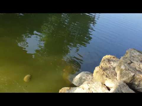 Fishing at Cambridge park
