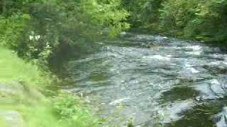 German Shepard & Lilly The Greyhound Cross Go Swimming By River In Corofin Ireland