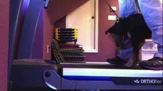 Treadmill Training Your Dog | Dog Training Denton Texas | On The Ball K9 Training