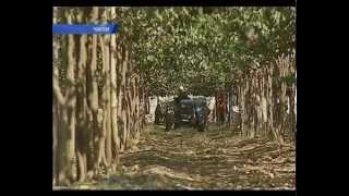 Чили. Виноградники в пустыне - Андрей Цаплиенко - Подробности - Интер
