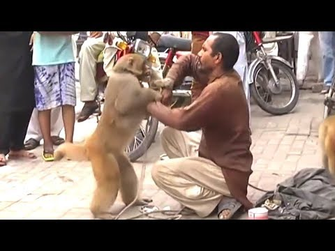Bandar Ne Madari Ko Sabak Sikhaya - Monkey Madari Fight | Video From My Phone
