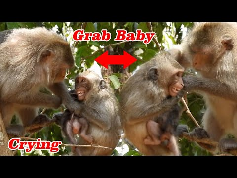 Grab Cute Baby CoCo On The Hight With Mom CatCat, Pitiful Baby Monkey Coco