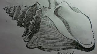 Conchiglia Seashell Speed Drawing