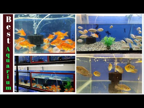 Best Aquarium Market In Hyderabad | Aquarium For Beginners | Aquarium Decoration Items