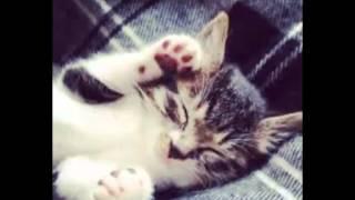 Beautiful photos kittens 5! Красивые фото котят 5!