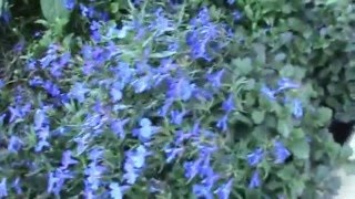 Travel to Israel. Part 12: Flowers in January. / Путешествие в Израиль. Часть 12. Цветы в январе.(January 2016. Hello to all my friends. I'm in Israel. You look ten parts of a video series about my stay in Israel. After moving from Tel Aviv to Jerusalem, we began ..., 2016-02-03T14:04:52.000Z)