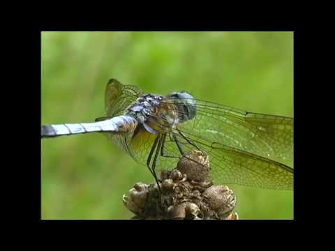What is That!? A Naturalist in Canada: Dragonflies and Reptiles