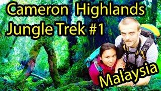 jungle walk trail 1 brinchang cameron highlands malaysia