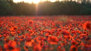 Reading Of In Flanders Fields By John Mccrae * 100 Years (1915   2015)