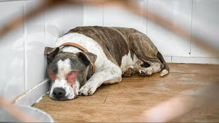 Amazing transformation of dog rescued from hell!