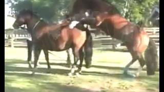 Great Animal Mating - Hottest Horses Mating Clip