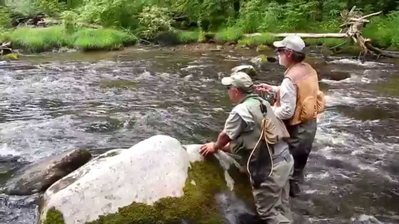 Hazel creek trout fishing great smoky mountain national for Buy tennessee fishing license