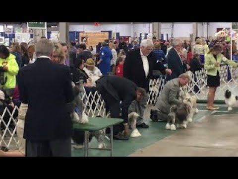 2017 03 18 IMG 4395 Kentuckiana Cluster Lowchen National Best in Breed Initial Eval