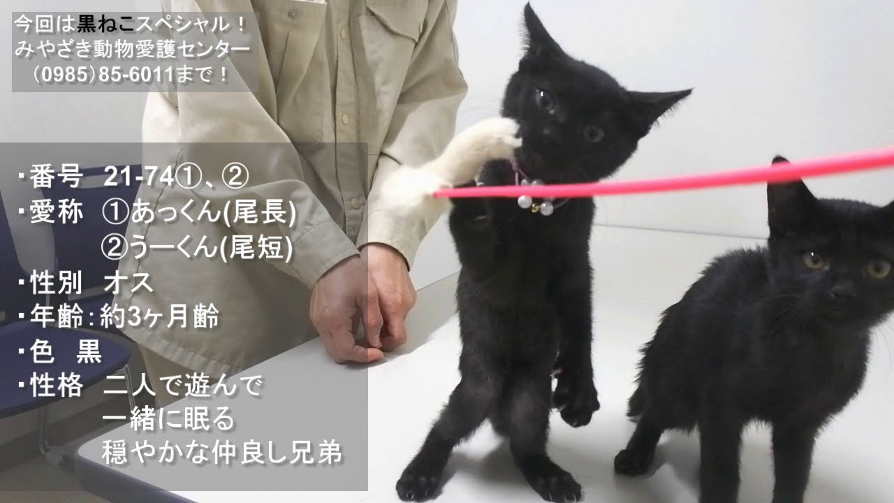 アミュー 黒 猫