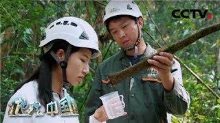 《地理·中国》 20200325 自然胜景·雨林探秘 3| CCTV科教