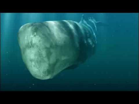 Whale Wars Music