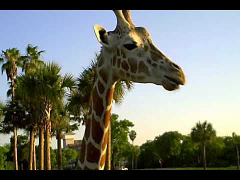 Serengeti Safari Youtube