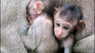 Maria And Kari 7 - Mom Monkey Want To Weaning Baby And Cry