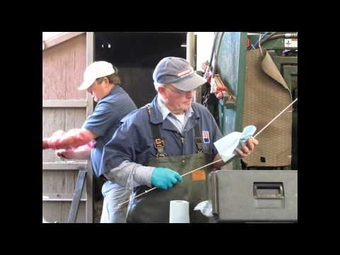 breeding 150 cows in one day at highview angus ranch breeding 150 cows ...
