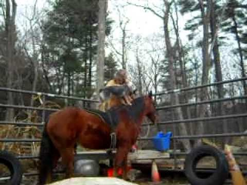 Teaching a Australian Cattle Dog to ride a horse.
