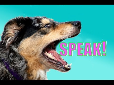 Easy, Dog Trick: How to Teach your Dog to Speak or Bark When you Ask.