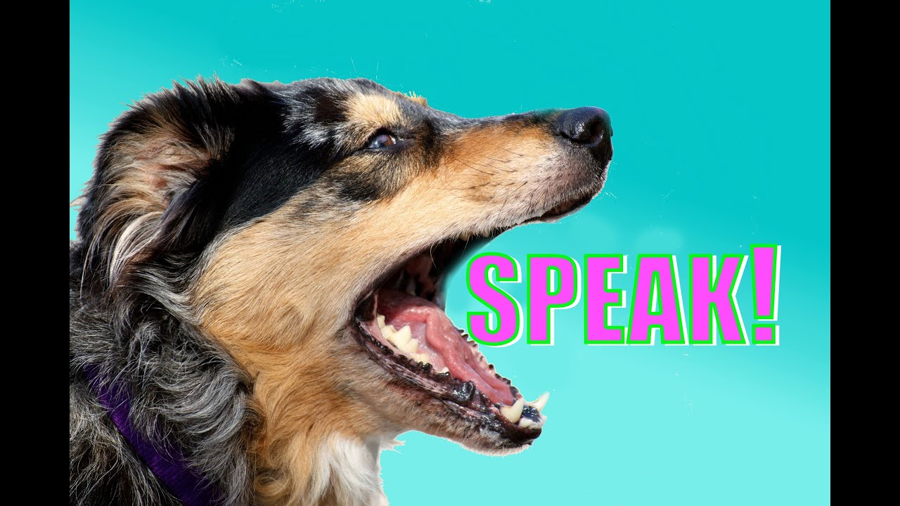 Hot To Teach A Dog To Speak