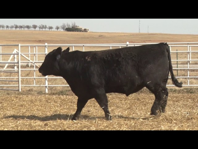 Express Ranches Lot 478