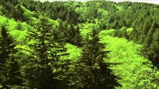 ASTRAGALaxy(Сироп с Астрагалом «ASTRAGALaxy» производится только из экологически чистого природного сырья, не содержит..., 2012-12-14T10:06:35.000Z)