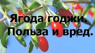 годжи ягода польза и вред