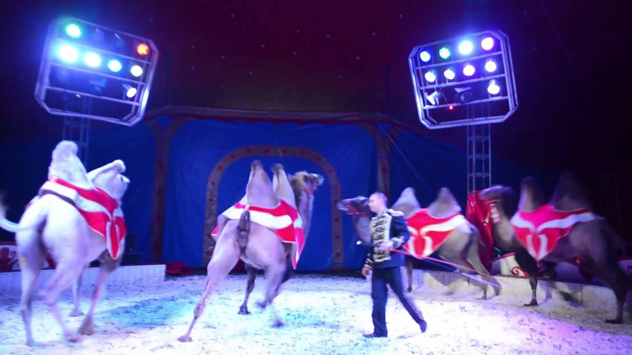 Circus Werona Präsentiert Elsa