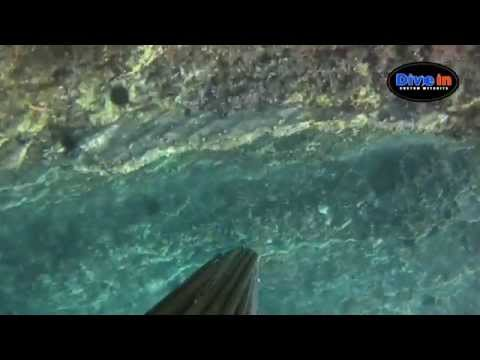 Dive In Spearfishing Vol. 2