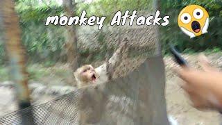 [WOW] Monkey Attack on Me - Chattbir zoo -  Chandigarh - Cute Animals - Funny Animals - classyrider