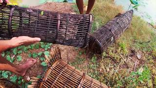 National Fishing in country side - Catfishes & Mud fishing in Cambodia Tradition Use fishing trap
