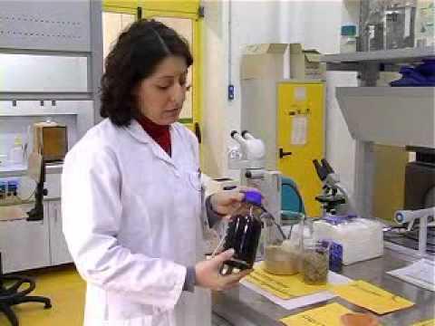 Biocarburanti da scarti vegetali