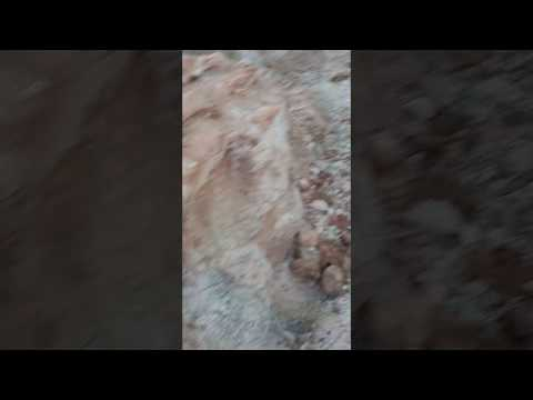 Fossilized wood u-dig in Arizona