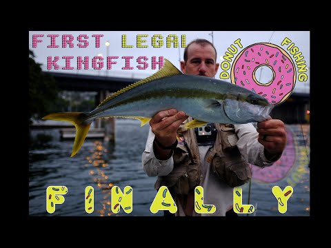 First LEGAL Sydney Harbour Kingfish of the season.