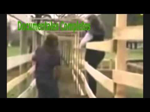 01 DOMADOR DE CABALLOS CABALLO CASTAÑO from YouTube · Duration:  1 hour 25 minutes 8 seconds