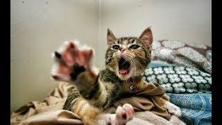 Смешные приколы с котами | new crazy animals 24
