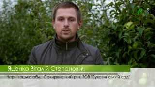№18 Стабильная прибавка при производстве выращивания  Яблок