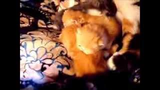 Ziakatz Monets babies are 3 weeks old