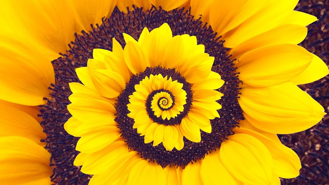 Spiral Dynamics - Stage Yellow