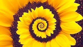 Spiral Dynamics - Stage Yellow thumbnail