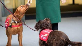 Нюх на коронавирус В Германии собак научили выявлять COVID 19
