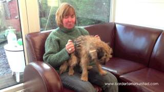 Why Did You Choose A Border Terrier?