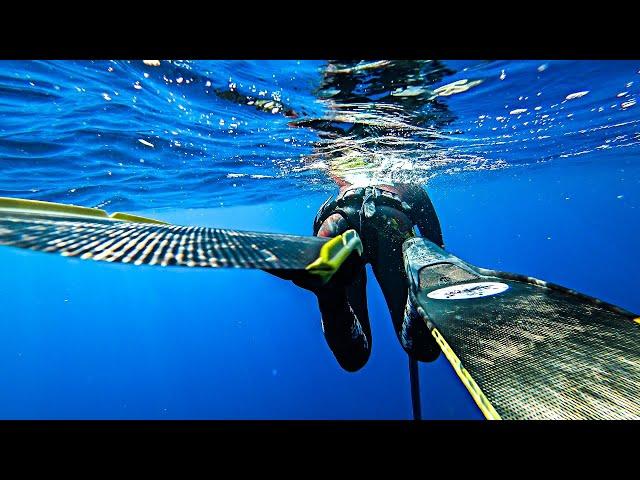 HOW TO: SPEARFISHING Dentex|Spearfishing Life 🇬🇷