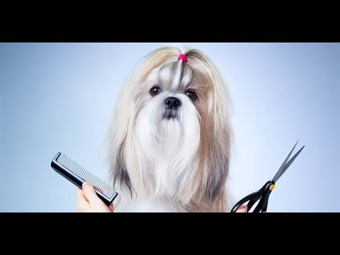 Online Dog Grooming Schools Jacksonville Online Pet Grooming