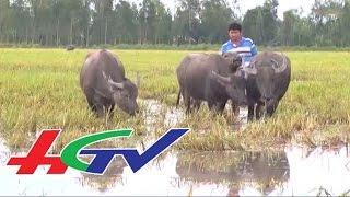 HGTV | Tỷ phú nuôi trâu