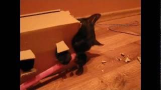 Mefisto i pudełko