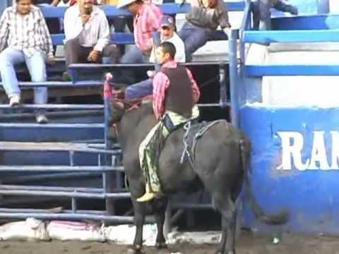 """Gorrión / """"Volador de Papantla"""" del Rancho 3 Coras-Torneo Rancho de Aguas  08 Julio 2012"""