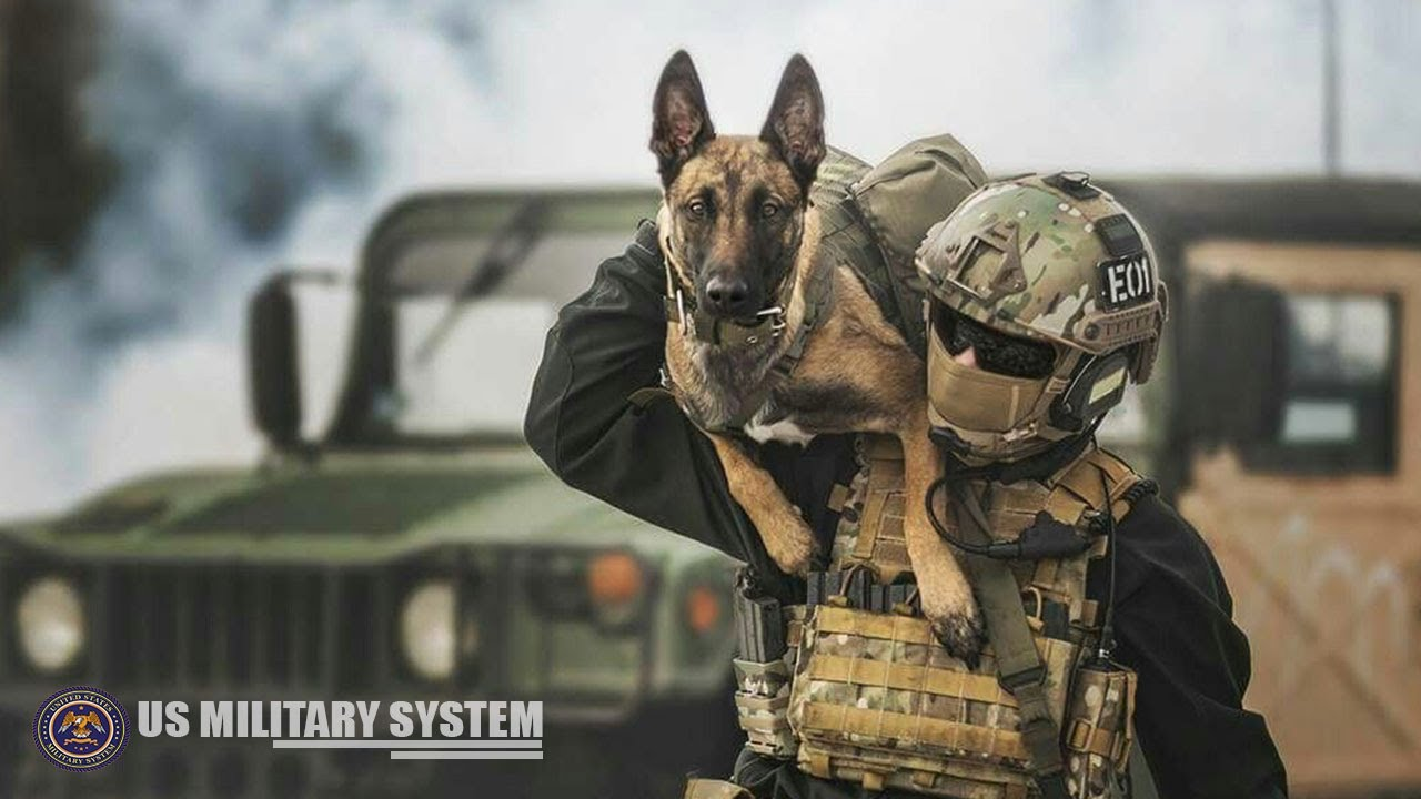 Here's Military Dogs that are specially Trained for Combat